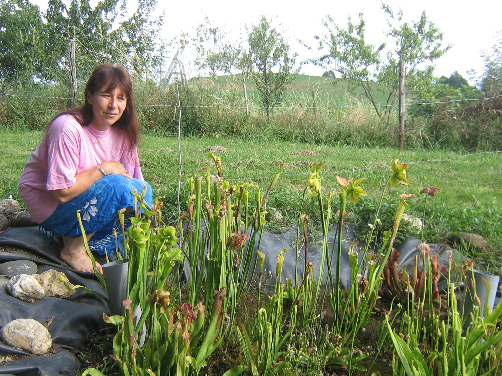 Eau air et fleurs plantes aquatique et de lagunage for Les plantes exterieur